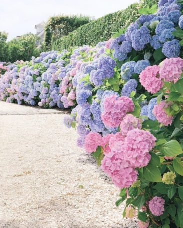 Hydrangea Heaven: 16 Dreamy Gardens To Make You Fall In Love With Summer