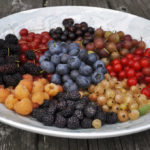 Fall's a season for planting and eating berries