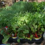 Plan and budget for a good return on your garden investment
