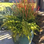 Get the professional look for your flower planters