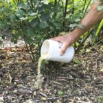 How to fertilize your garden organically