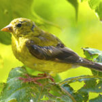 Attract more birds to your yard by 'birdscaping'