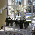 Orchids in Winter & Make Your Own Terrarium!