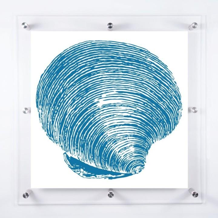 acrylic-framed-cockle-shell-wall-art-print