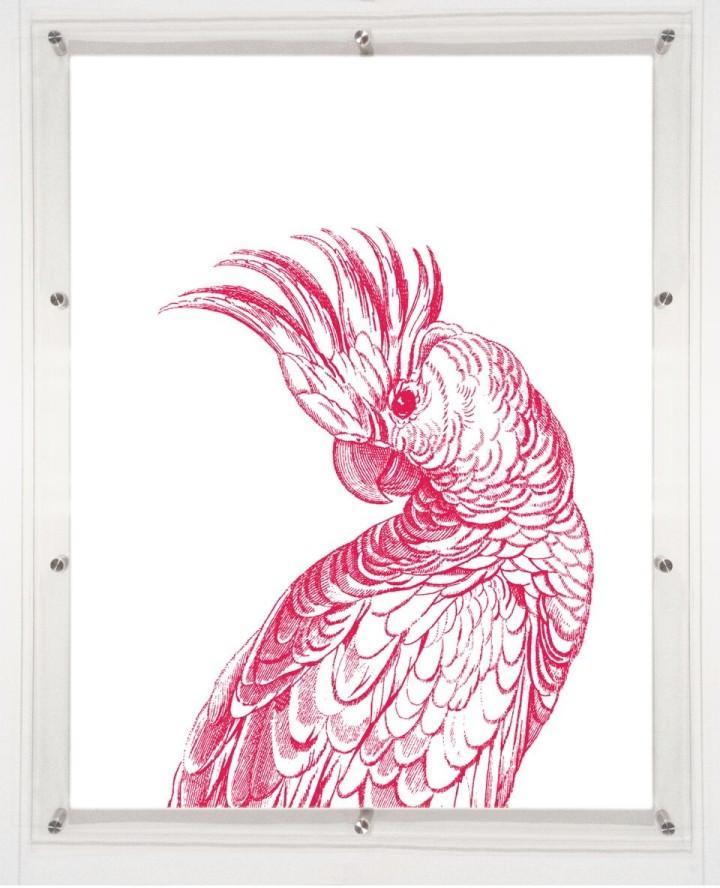 acrylic-framed-coocoo-bird-wall-art-print-1