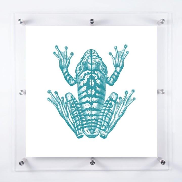acrylic-framed-frog-wall-art-print