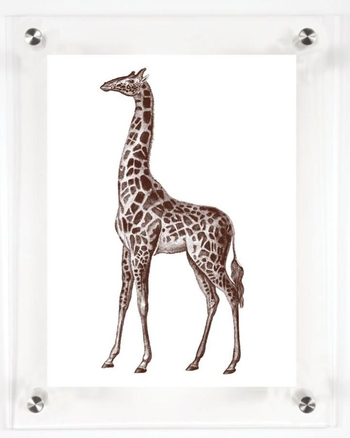 acrylic-framed-giraffe-wall-art-print-1