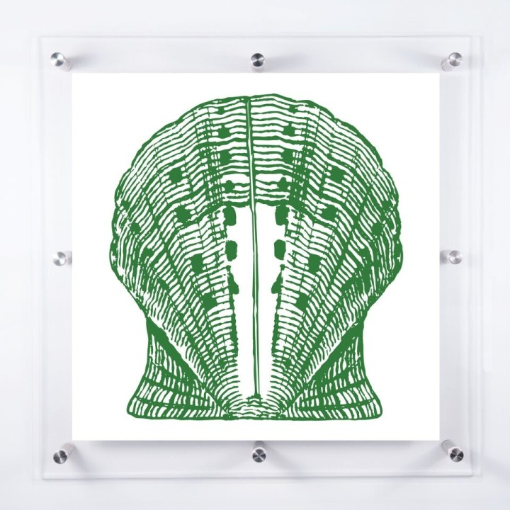 acrylic-framed-scallop-shell-wall-art