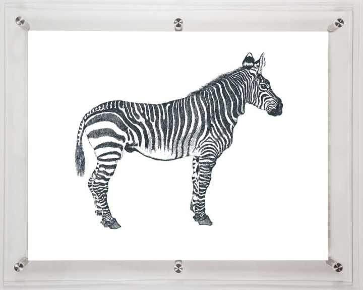 acrylic-framed-zebra-wall-art-print-3