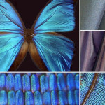 Guest Post: A Design Challenge Using the Principles of Biomimicry