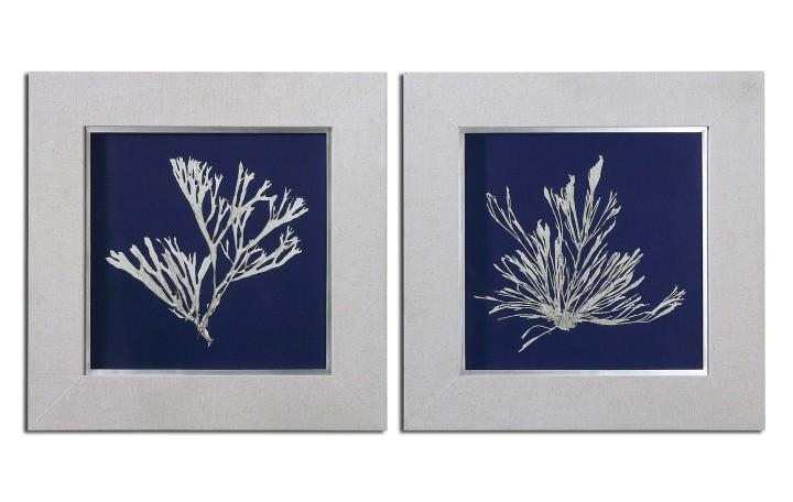 framed-seaweed-prints-1