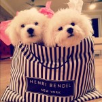 Pet Gift Guide: Chic Dog Accessories at Henri Bendel