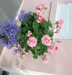 Come into My Garden!  (and be sure to close the gate)