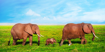 End of Year Christmas Philanthropy – 96 Elephants Campaign